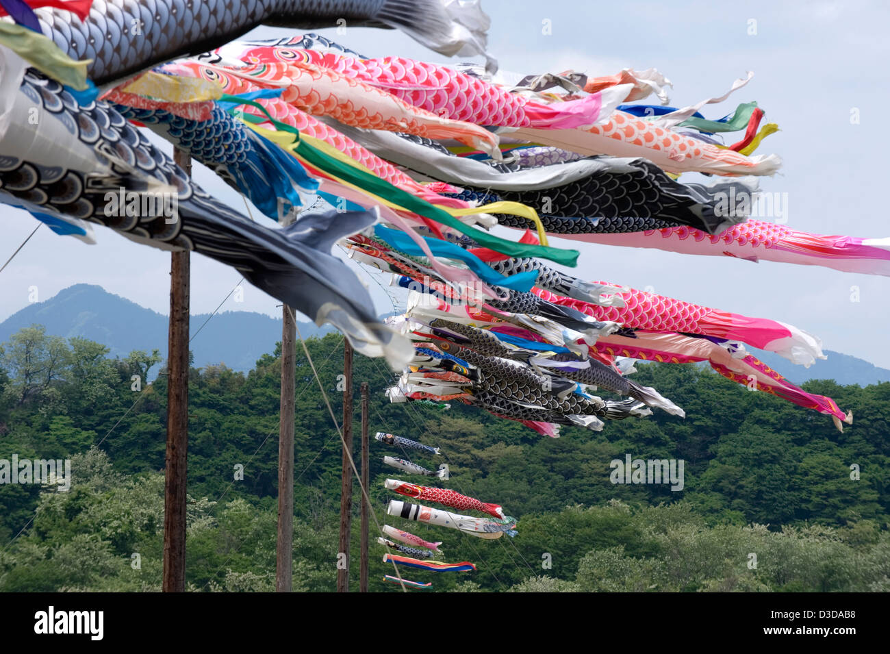 Hundreds of colorful koinobori carp streamers waft in wind on May 5th, Boys Day, a National Holiday in Japan during - Stock Image