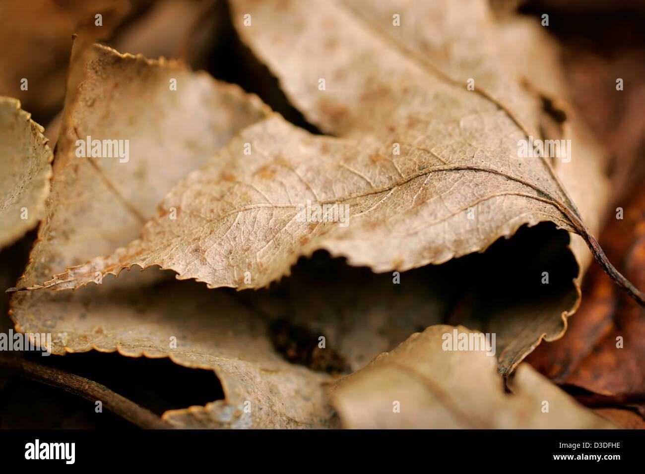 Autum leaves - Stock Image