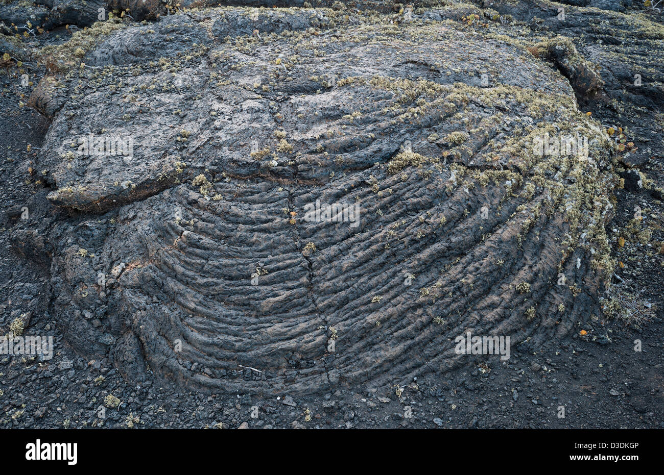 Detail of lichen-covered pahoehoe or ropy lava near Masdache, Lanzarote, Canary Islands, Spain - Stock Image