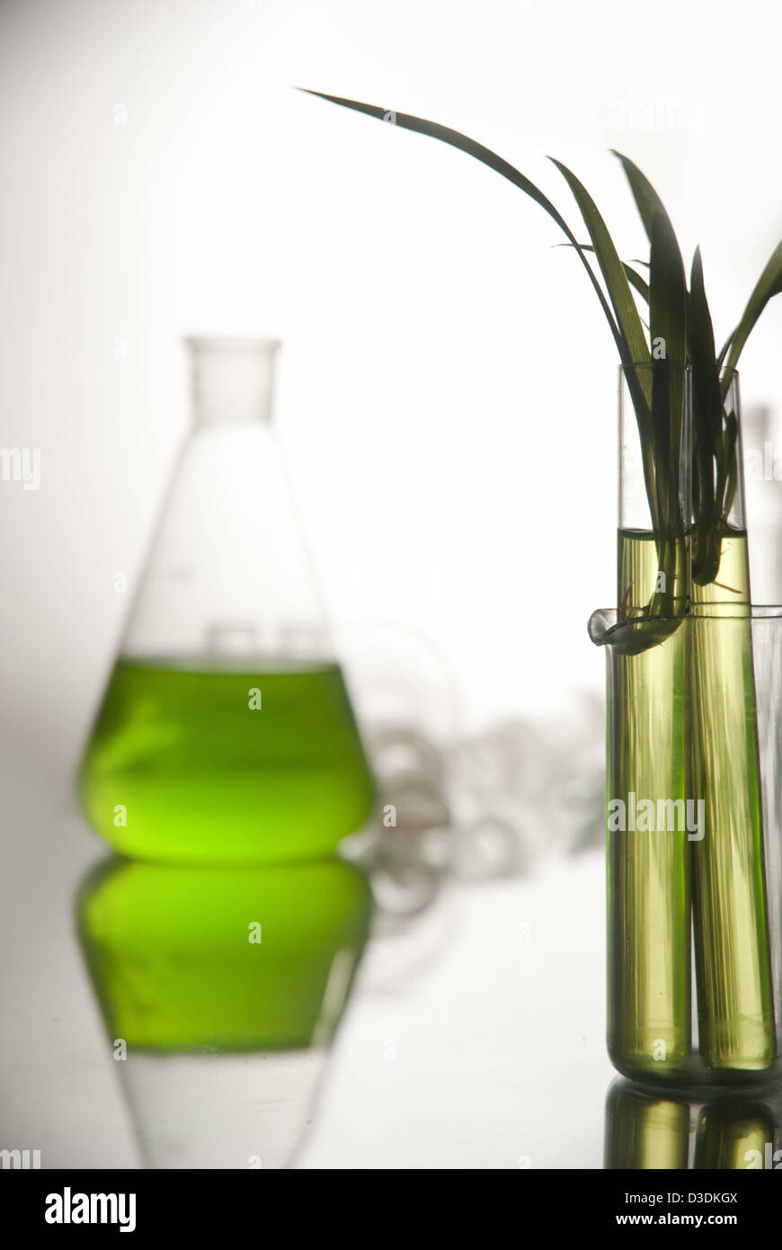 plantlet in the tube in lab - Stock Image
