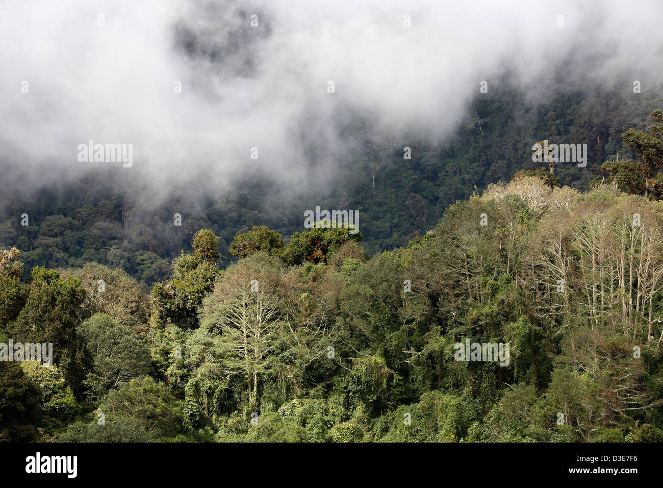 Mist on a forested ridge, Parque Nacional Volcan Baru, Panama - Stock Image