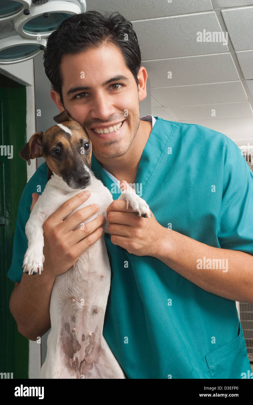 Picture of a veterinary taking care of pet - Stock Image