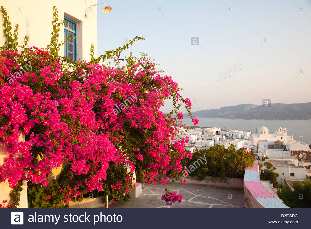 bouganville,plaka village,milos island,cyclades islands,greece - Stock Image