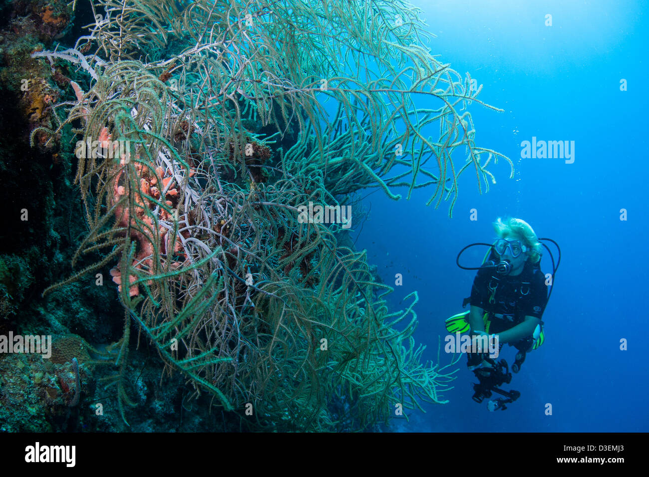 Dive Certification Stock Photos & Dive Certification Stock Images ...