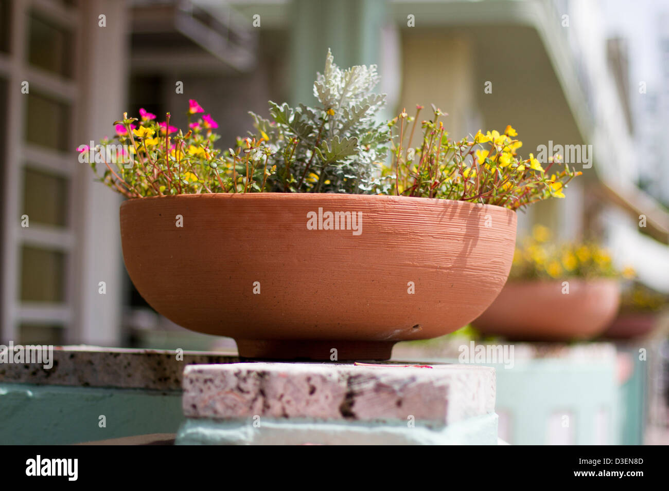Potted plants on front porch - Stock Image
