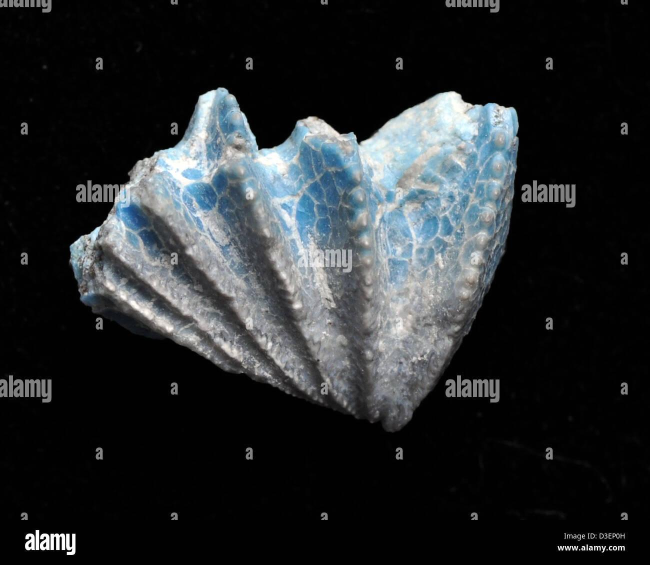 Lungfish Blues - Stock Image