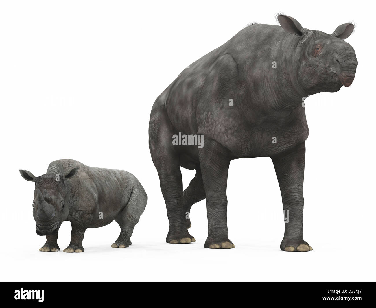 An adult Paraceratherium compared to a modern adult White Rhinoceros. - Stock Image