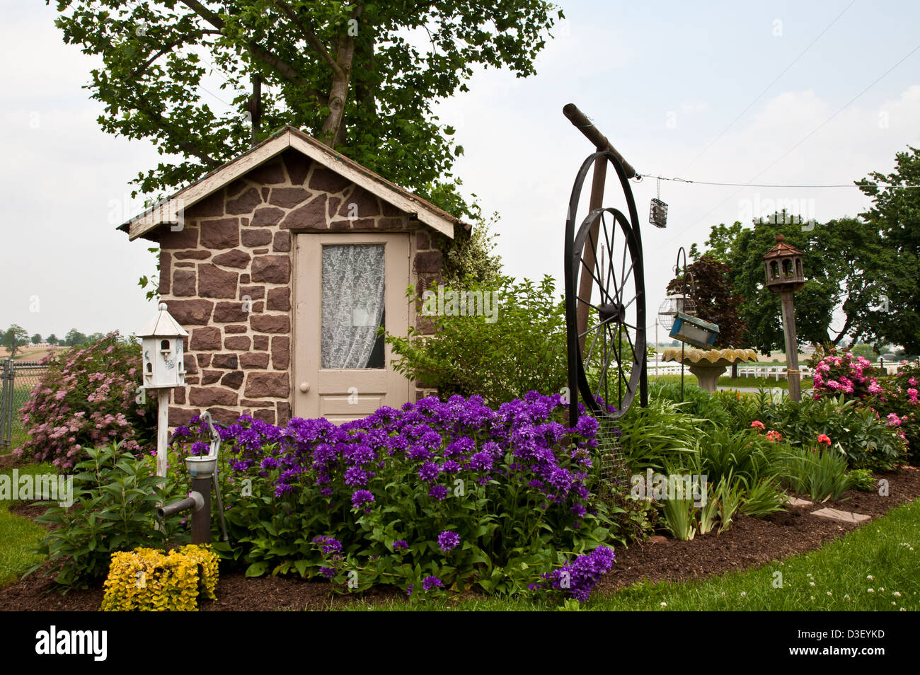 amish spring house  colorful purple flowers