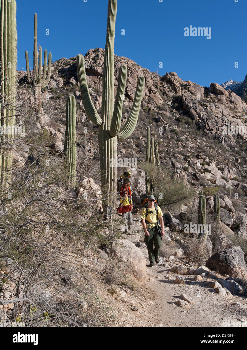 Members the Southern Arizona Rescue Association team descending out of the mountains after going up to help a fall - Stock Image
