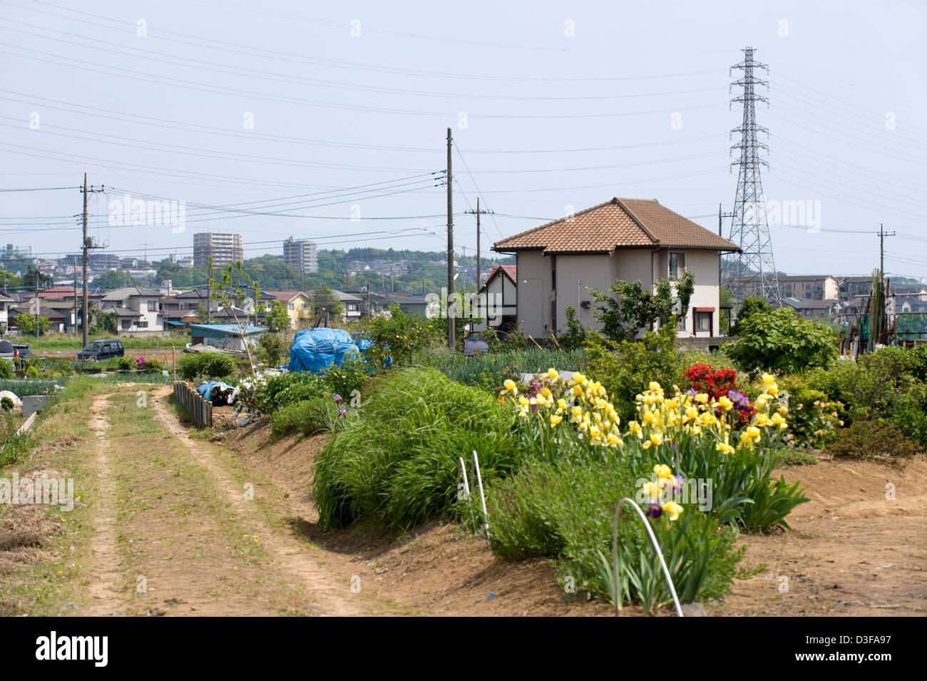 Vegetable and flower gardens contrast with high-tension power lines in the rural countryside of Kanagawa Prefecture. - Stock Image