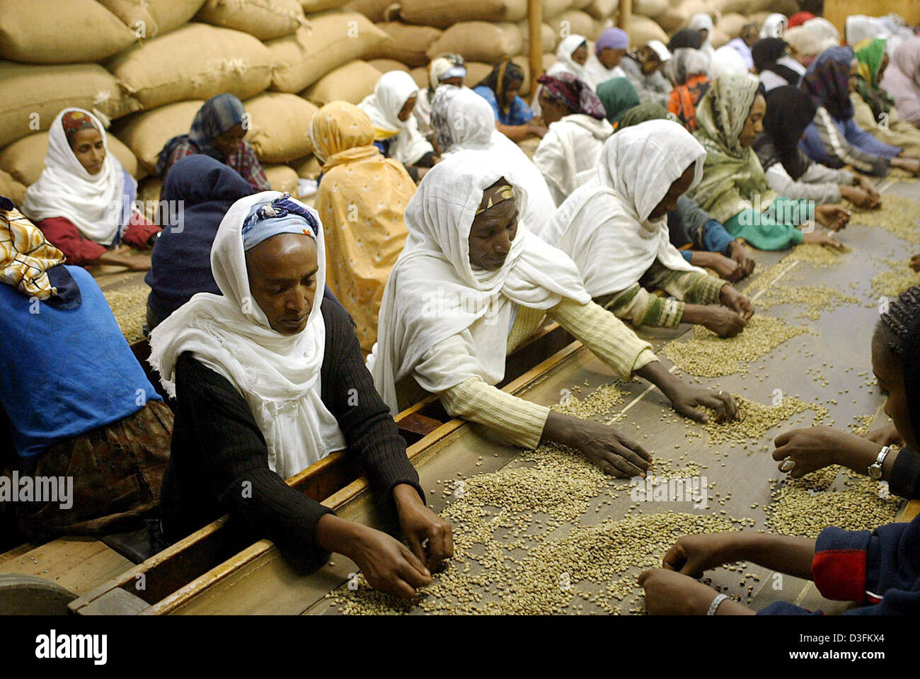 Dpa Women Sort Coffee Beans At The Coffee Factory Bagersh