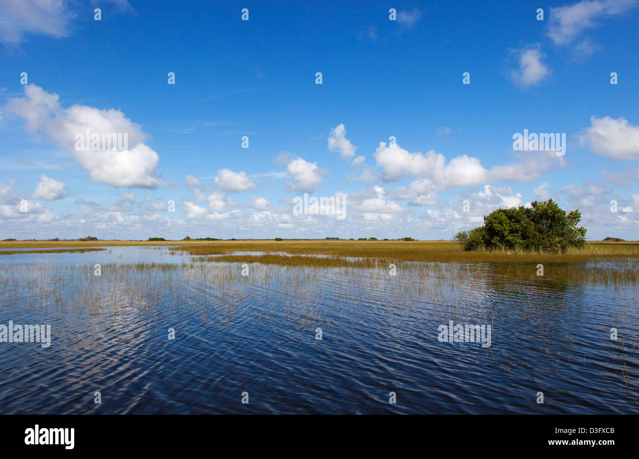 The Everglades, Florida, USA - Stock Image