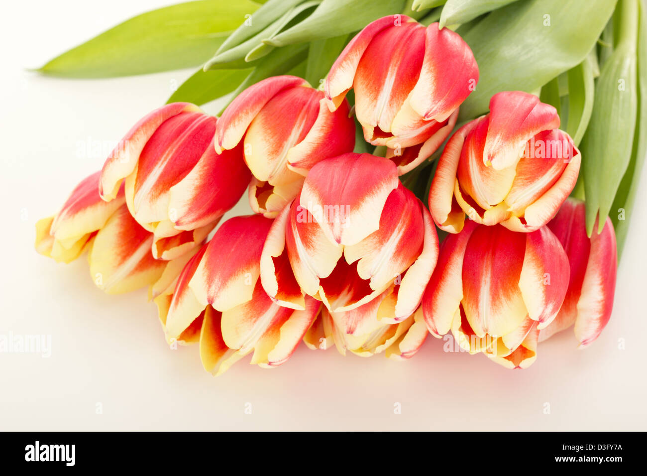 Bunch of tulips - Stock Image