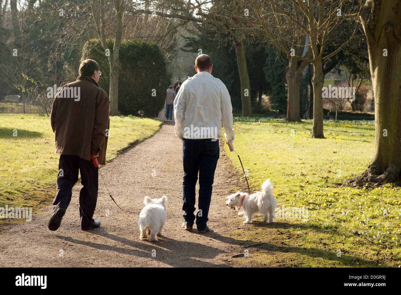 Two men walking two dogs ( terriers ) from the rear, in spring, England, UK - Stock Image