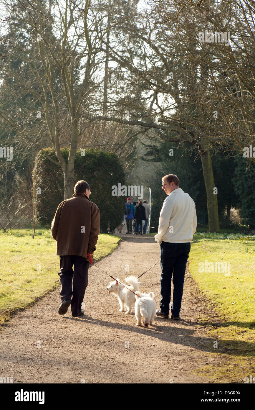 Two men walking two dogs ( terriers ) from the rear, England, UK - Stock Image