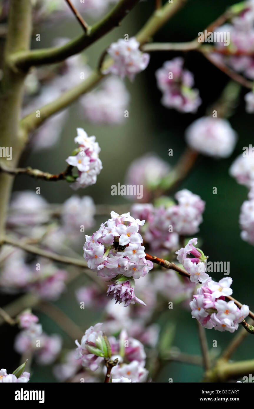 Pale Pink Flowers Stock Photos Pale Pink Flowers Stock Images Alamy