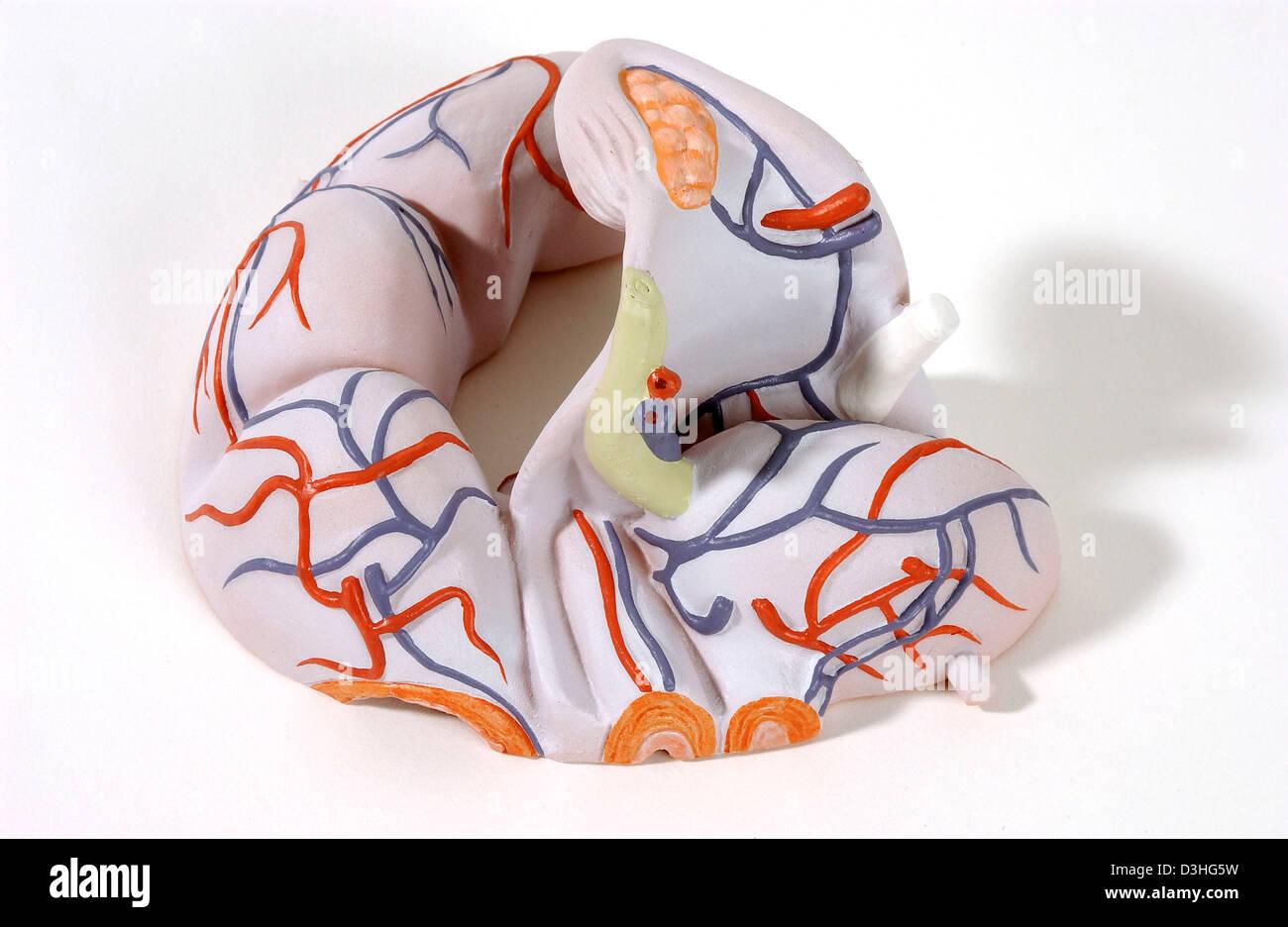 ANATOMY, FEMALE GENITALIA Stock Photo: 53860965 - Alamy
