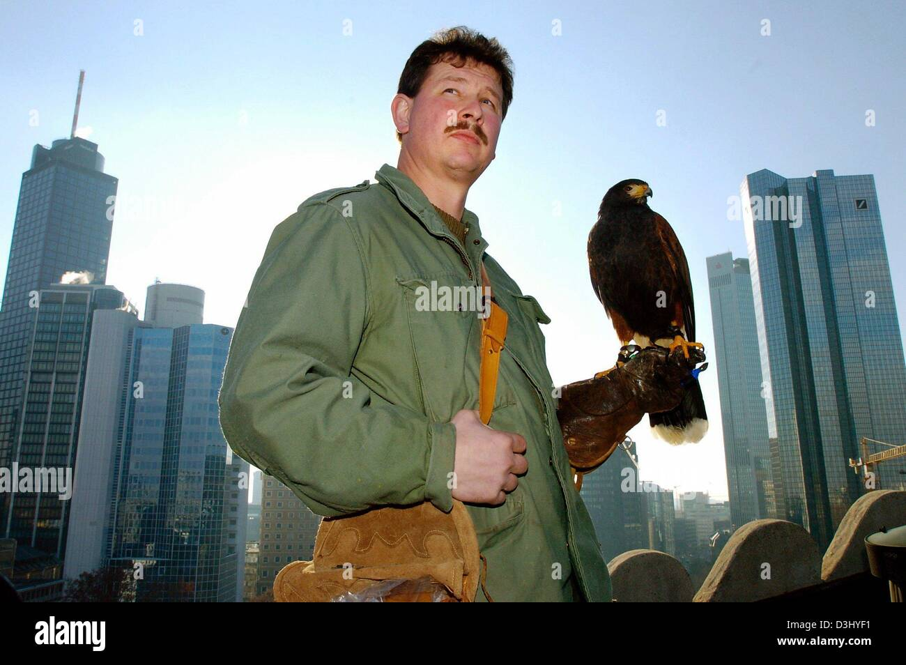 (dpa) - Falconer Frank Schaumann holds female buzzard Ronja on his arm as he stands on the rooftop of the opera - Stock Image