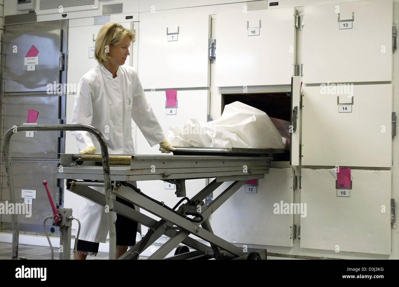 (dpa) - Doctor Annette Debertin slides a corpse into a refrigerated box in the autopsy chamber of the Medical University - Stock Image