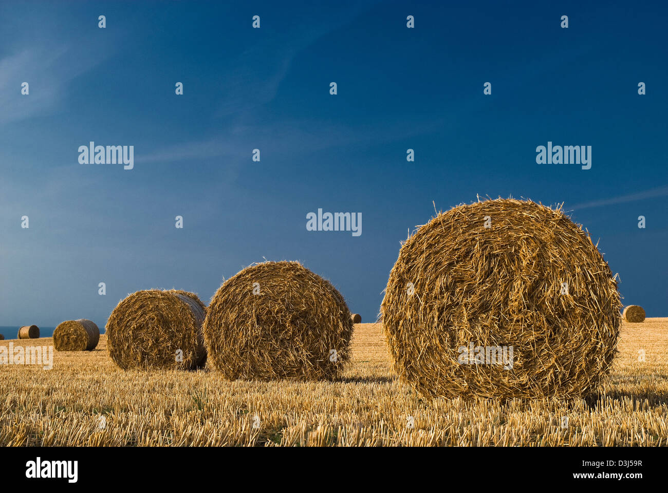 hay bails on coastal field in summer - Stock Image