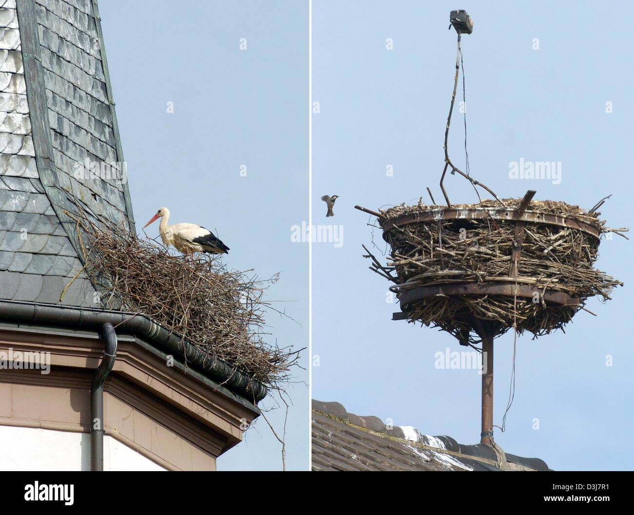 (dpa) - The picture combo shows a deserted and an occupied (L) stork nest on top of the village church in Voerstetten, - Stock Image