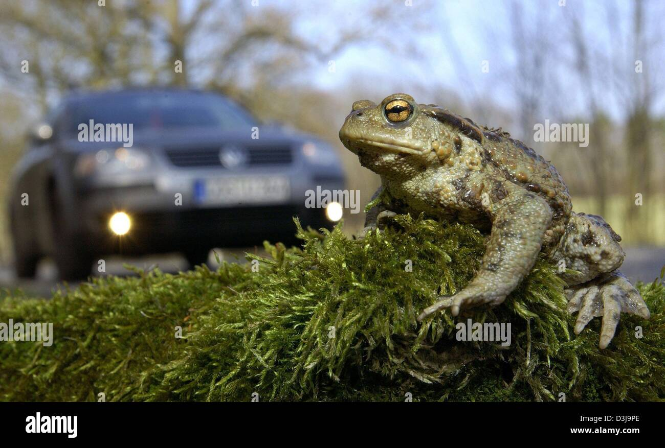 toad on a road stock photos toad on a road stock images alamy