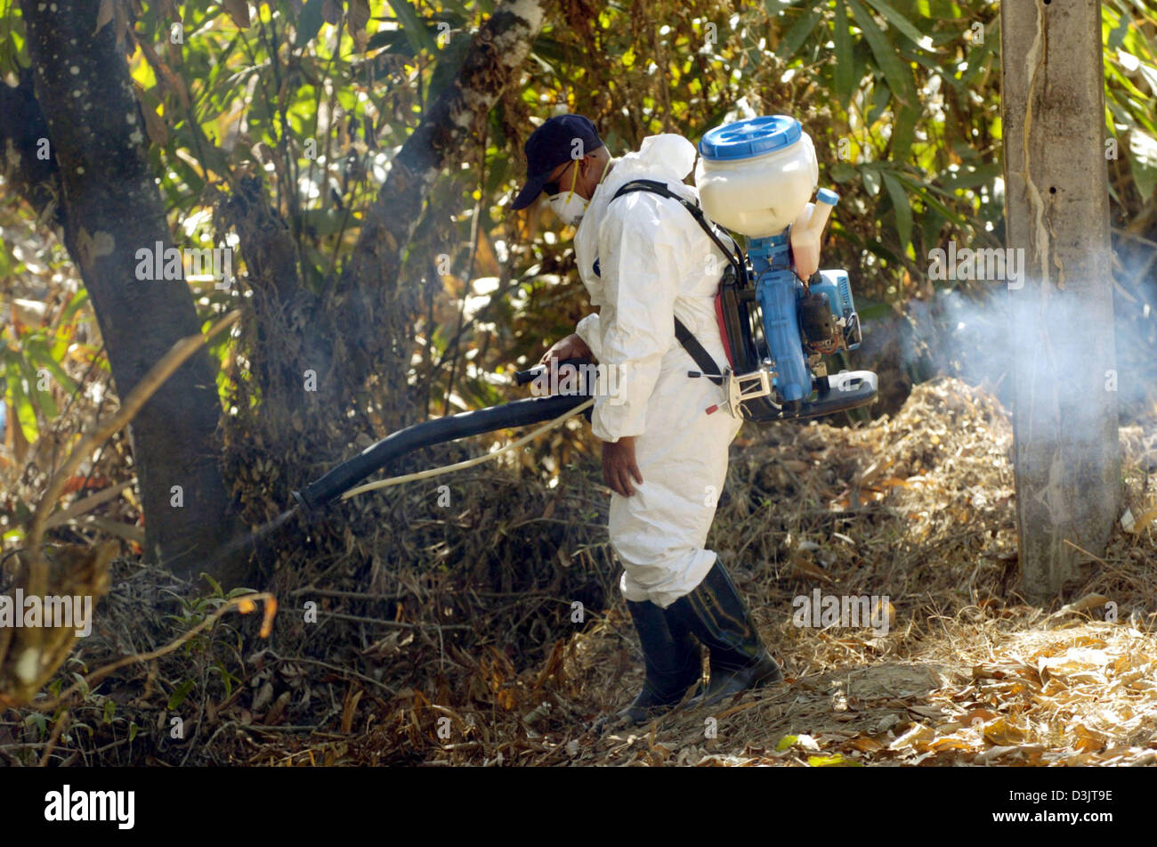 (dpa) - A worker sprays disinfectant into the scrub near Khao Lak, Thailand, 13 January 2005. This is supposed to - Stock Image