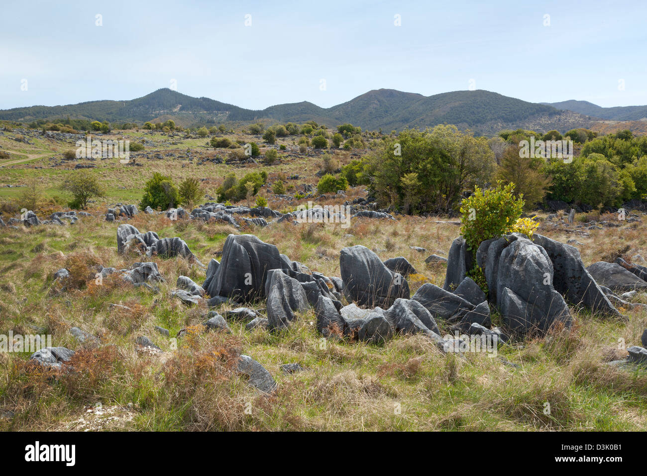 Marble in Takaka hills, New Zealand - Stock Image