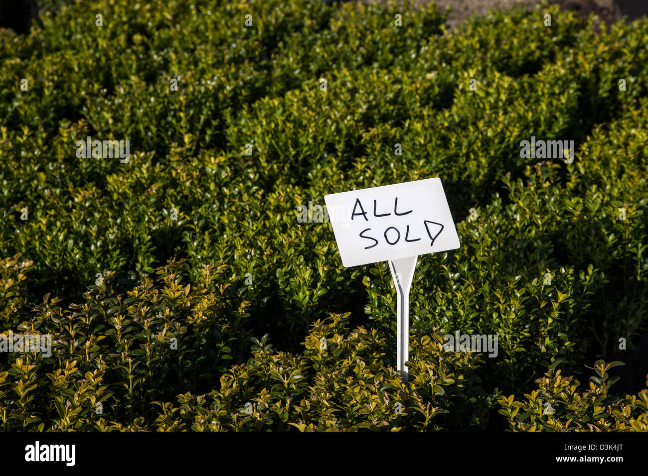 All Sold _ Box plants sold in J Jones Nursery in Southport, Merseyside, UK - Stock Image