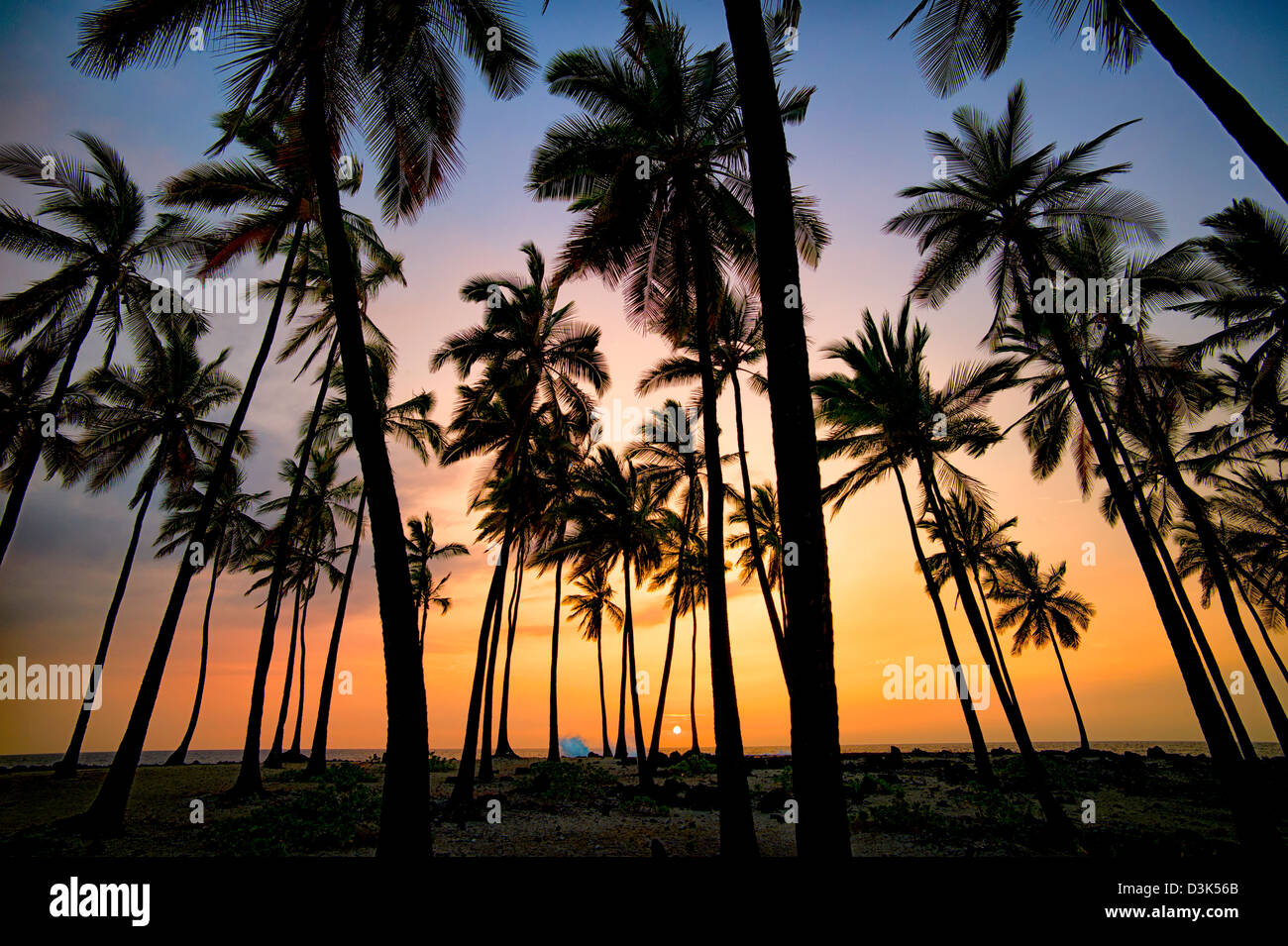 Palm trees at The Place of Refuge with sunset. Honaunau National Historic Park. The Big Island, Hawaii. - Stock Image