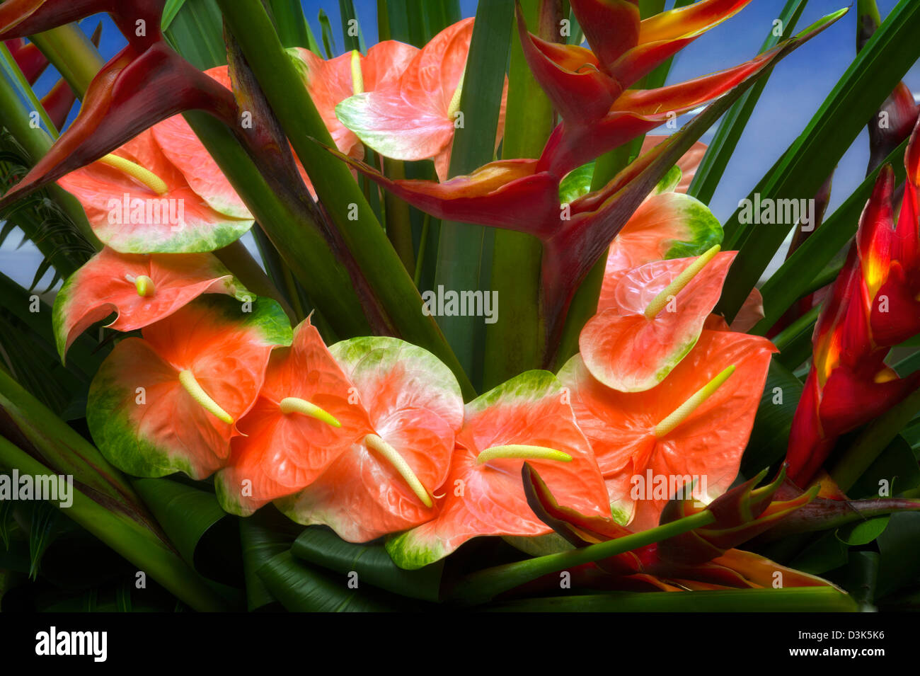 Tropical flower display with Anthurium. - Stock Image