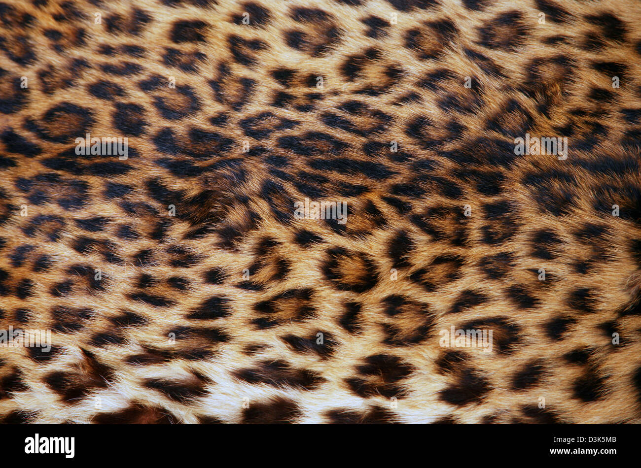 af37fbc4c8 Full screen high resolution shot of a skin of the leopard. Good for a  texture