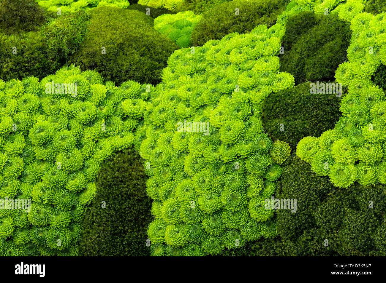Mosses and rock garden succulents. - Stock Image