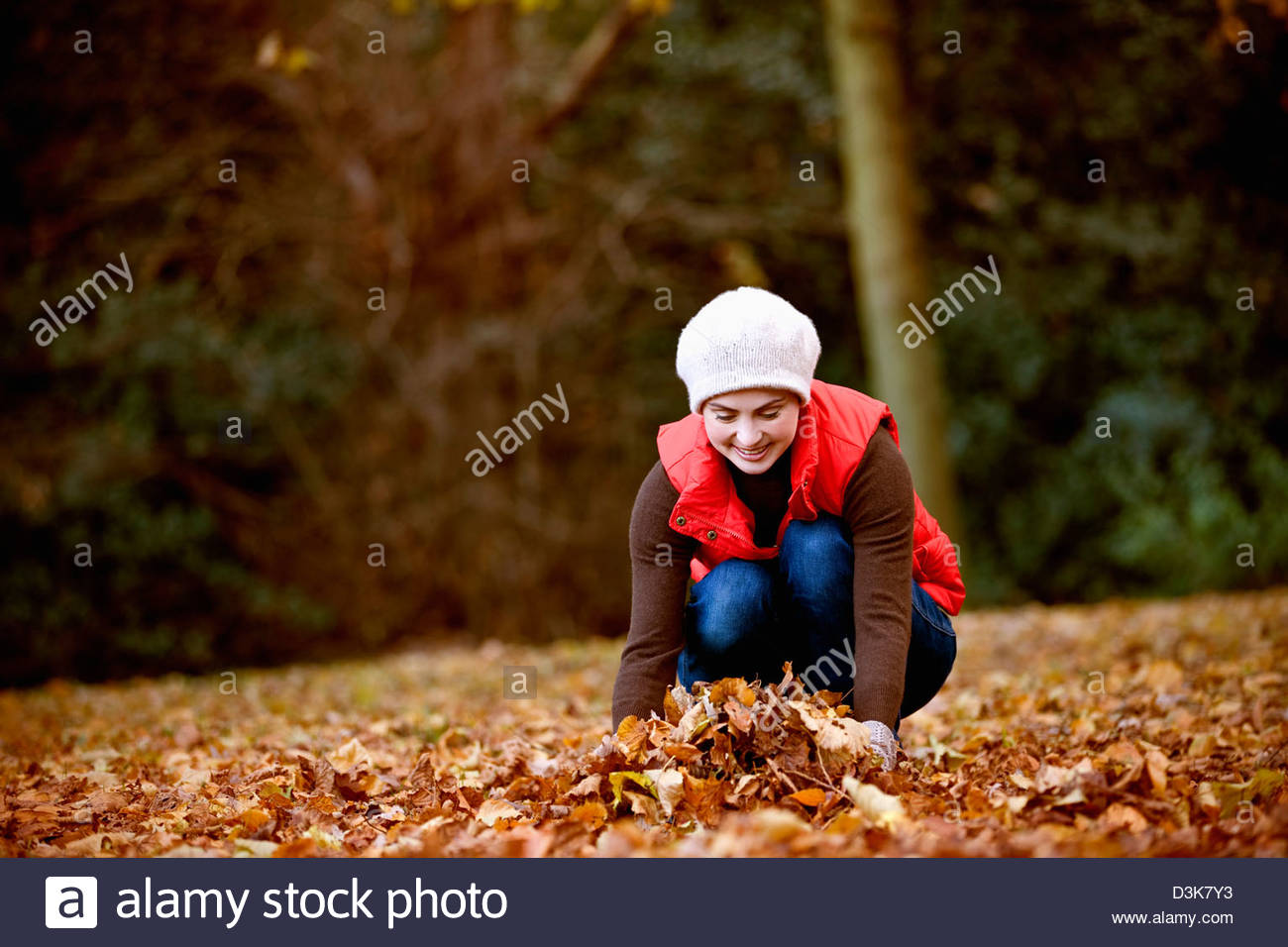 A woman gathering autumn leaves - Stock Image