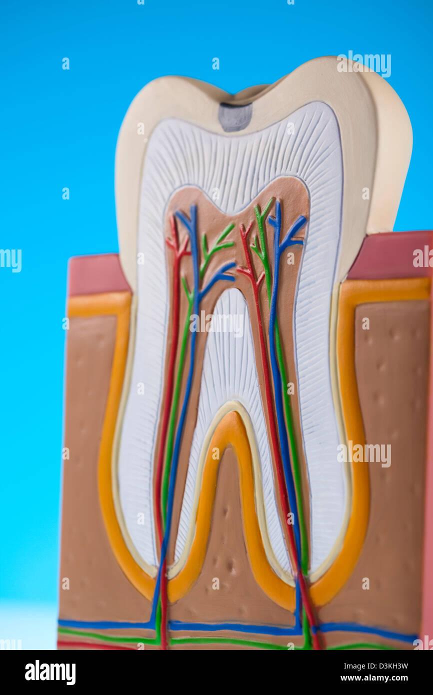 Atractivo Hulu Anatomía Gris Ilustración - Anatomía de Las ...