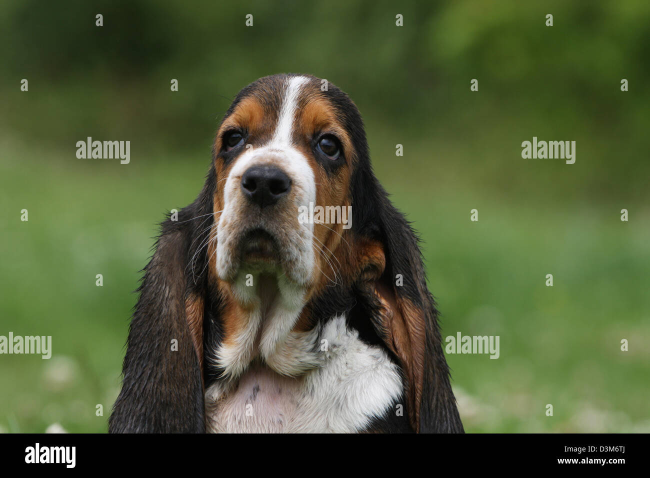 Hush Puppy Dogs Stock Photos Hush Puppy Dogs Stock Images Alamy