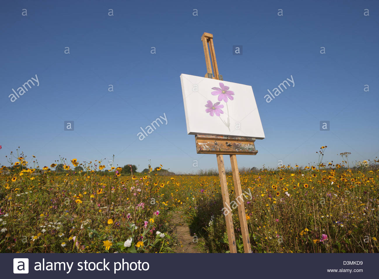 Blank canvas on easel in sunny wildflower field - Stock Image