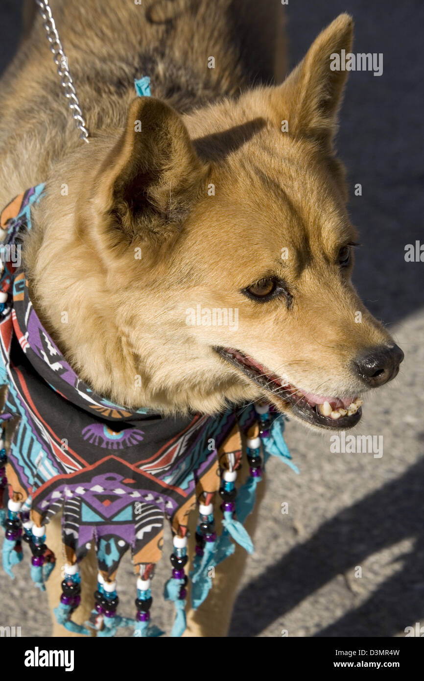 Dog with kerchief, Death Valley 49er Encampment Parade, Death Valley National Park, CA, USA - Stock Image