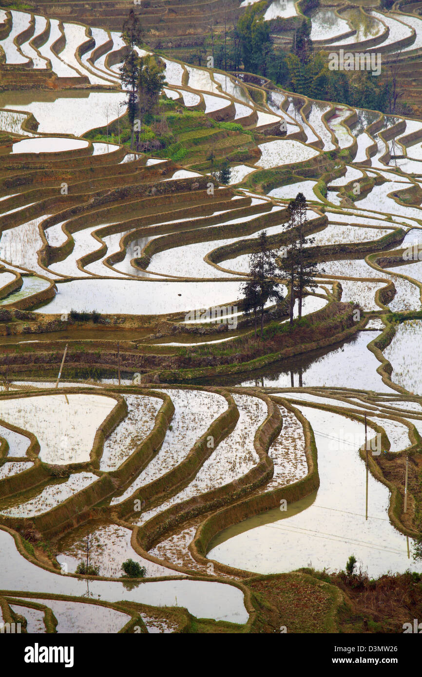 China, Yunnan, Yuanyang, rice terraces, - Stock Image