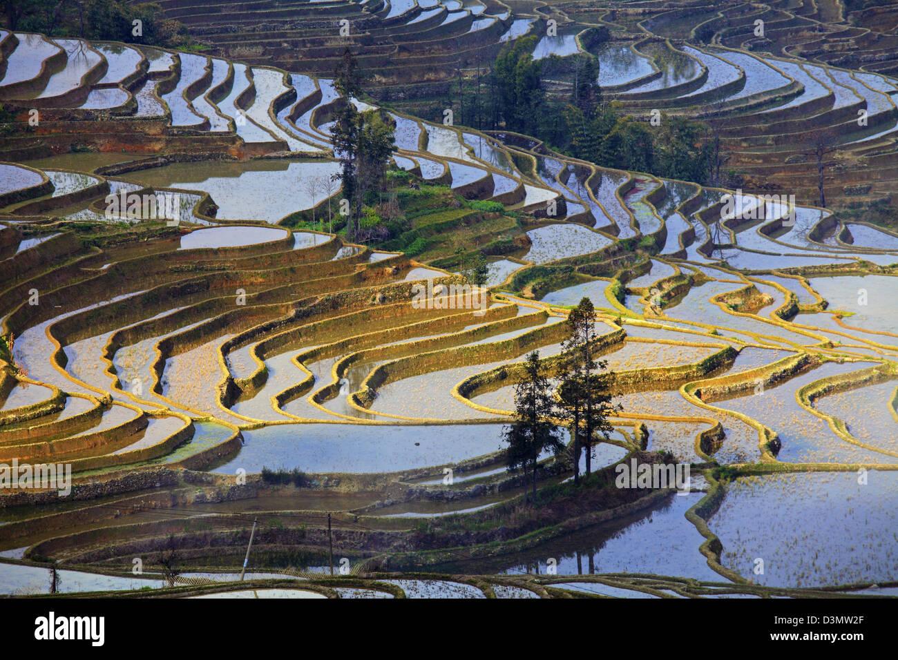 China, Yunnan, Yuanyang, rice terraces, - Stock Image