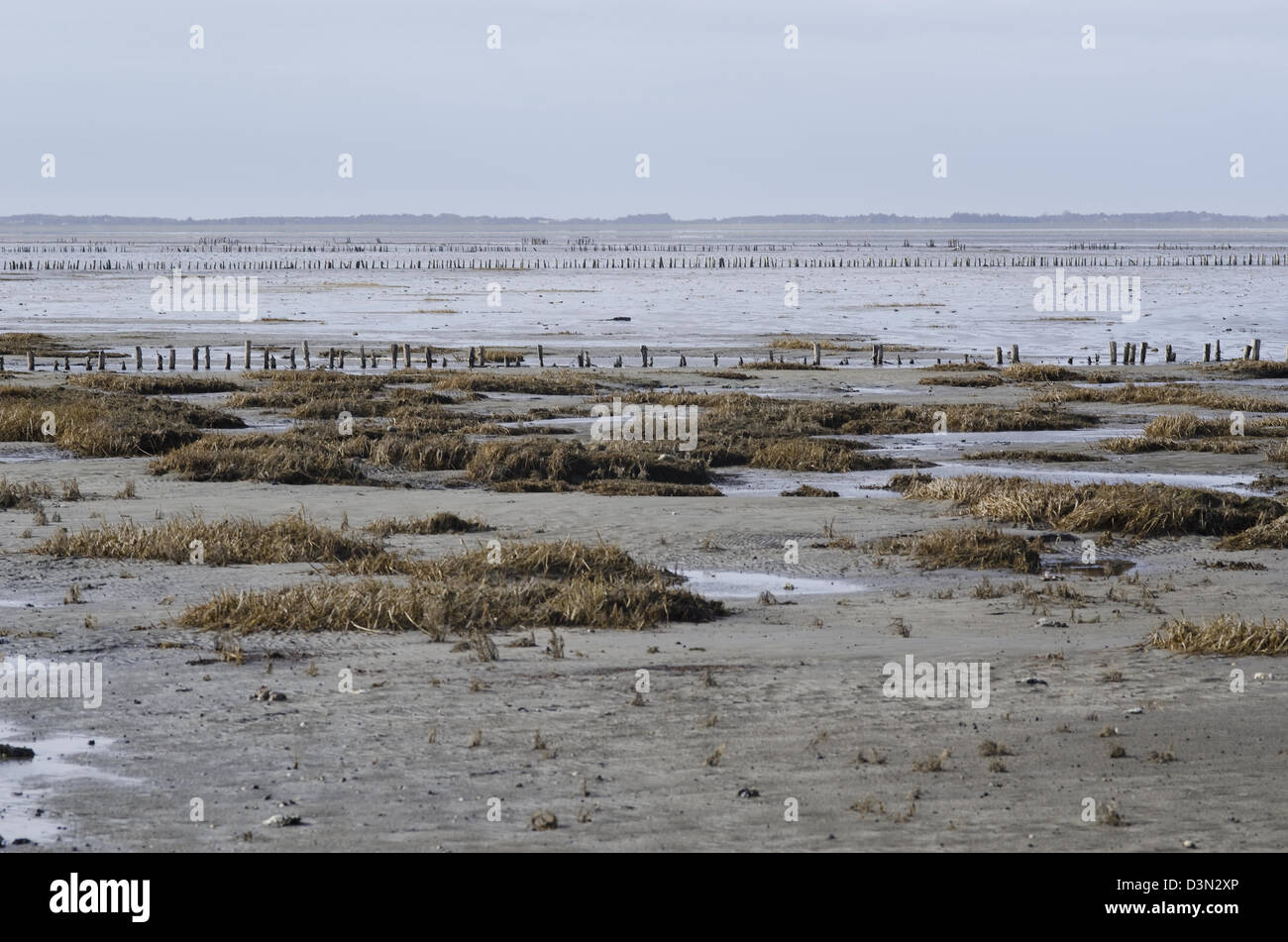 Wadden Sea, the intertidal zone in the southeastern part of the North Sea Stock Photo