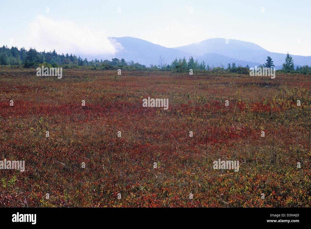 Elk282-2210 Maine, Acadia National Park, upland heath landscape - Stock Image
