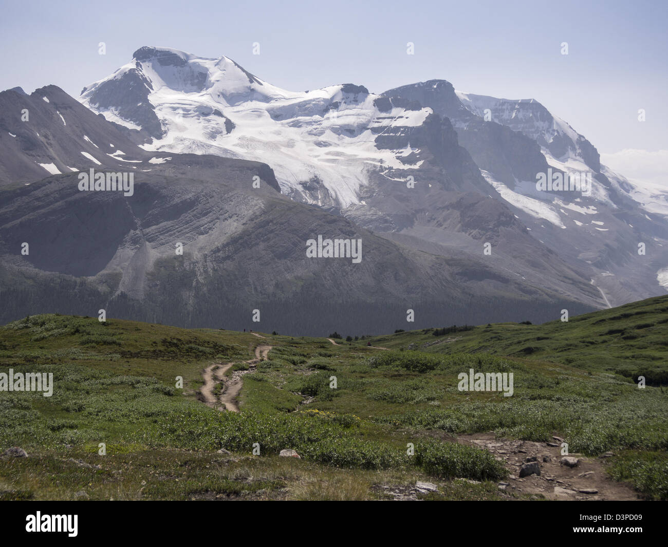 Path toward the Mountains. Hikers follow the winding path on the Wilcox Pass. Mount Athabasca is in the background. - Stock Image