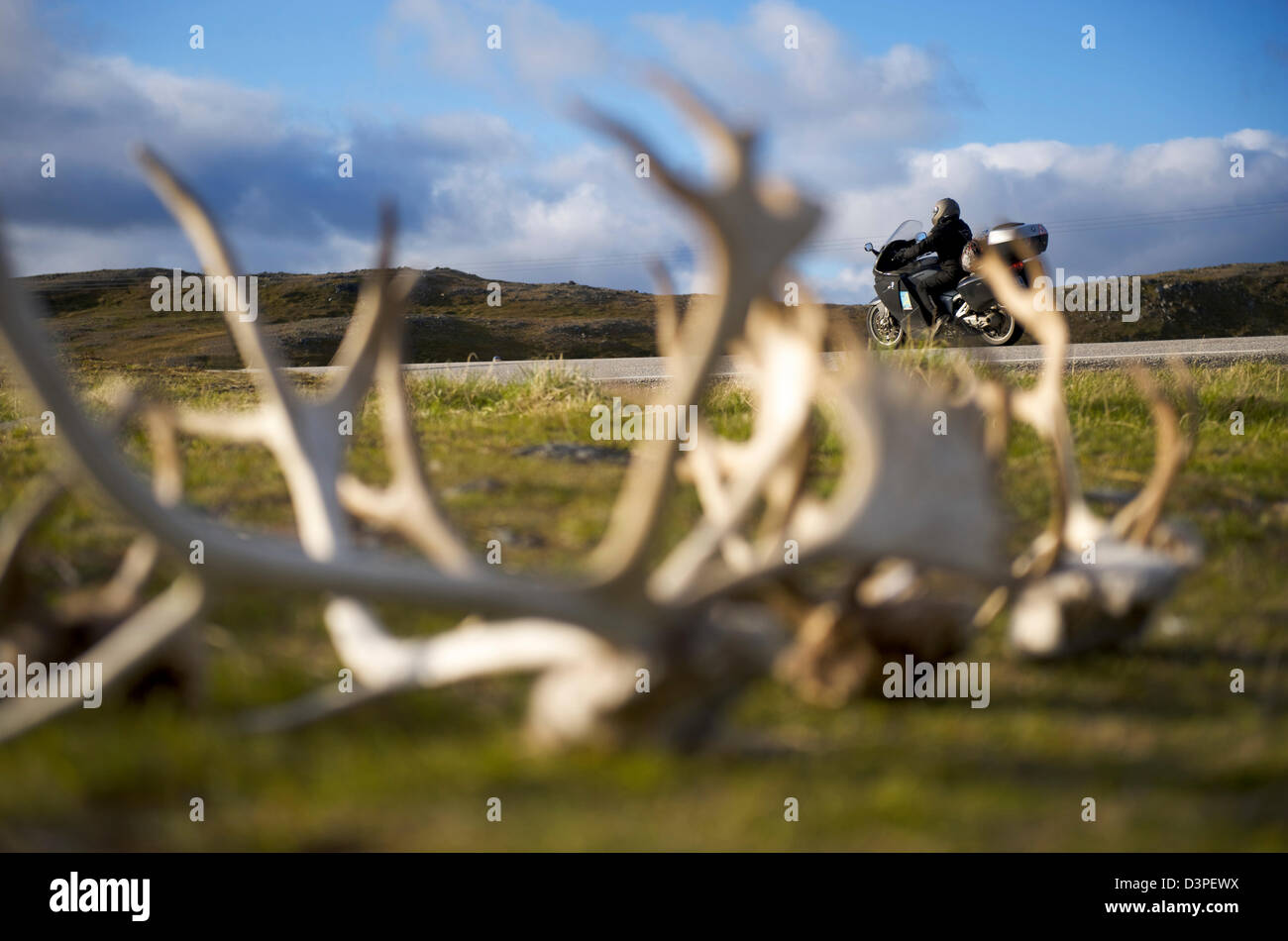 Reindeer Antlers in North Cape Norway - Stock Image