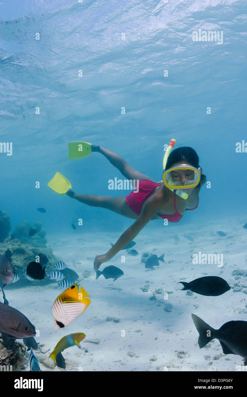 A threadfin butterflyfish joins the snorkeler (MR) along with other reef fish in Rarotonga's inner lagoon, The Cook - Stock Image
