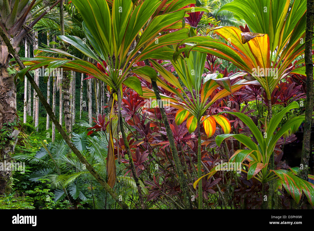 Tropical Plants Stock Photos & Tropical Plants Stock Images - Alamy