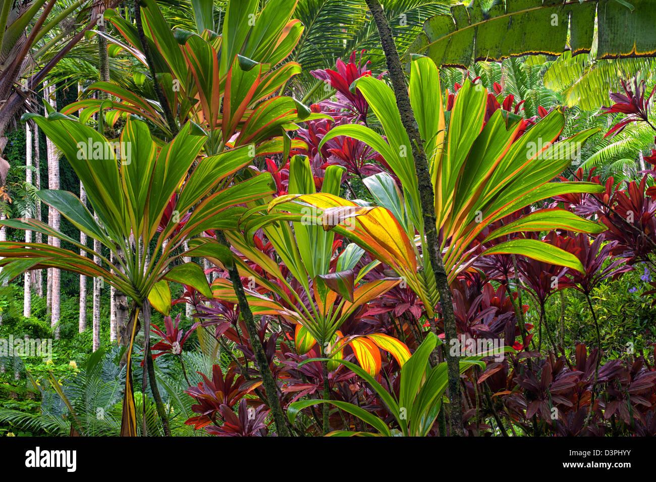 Hawaii Tropical Botanical Gardens. Hawaii, The Big Island.