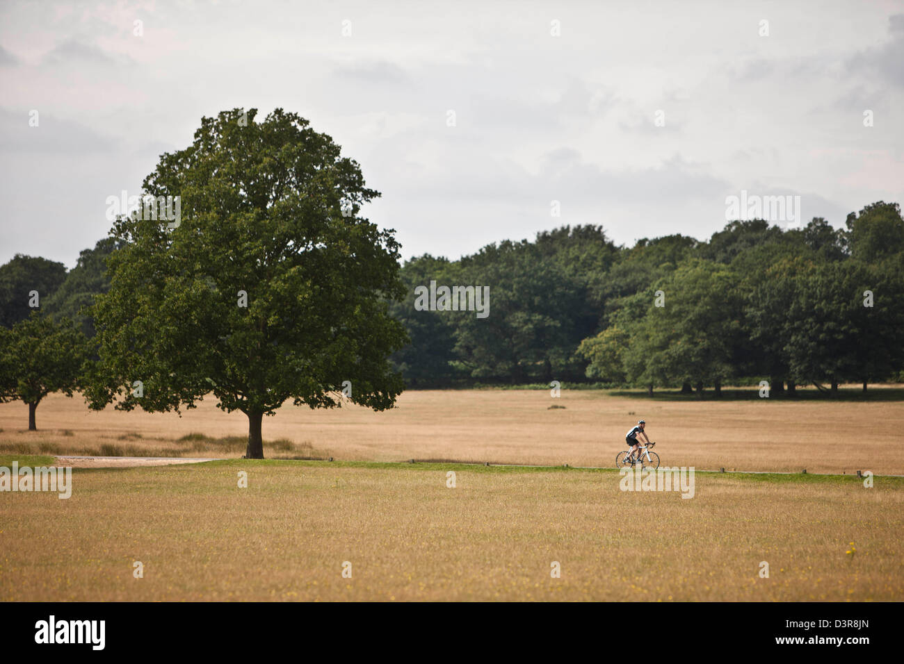Cyclist on Olympic cycle route, Richmond Park, London, England, UK - Stock Image
