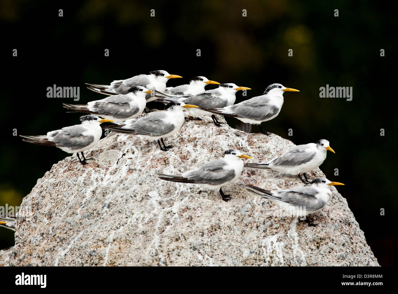 Birds standing on rock all looking in same direction - Stock Image