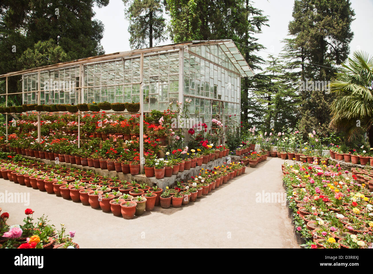flower nursery at company bagh in mussoorie, uttarakhand, india